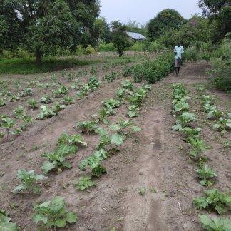 Atiriu Agricultural Centre
