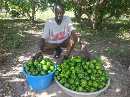 green peppers in tubs
